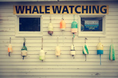 ©2011 Mike Temple Photography   Whale watching