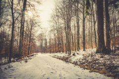 ©2012 Mike Temple Photography   A Winter's Trail