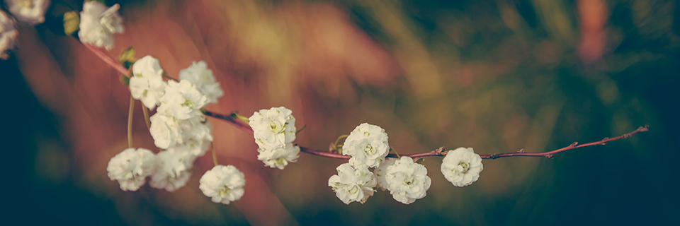 Spring blooms into life