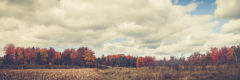 ©2015 MikeTemple Photography | Fall Landscape