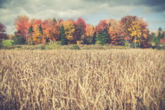 ©2015 Mike Temple Photography | Fall colors, Wall of Fire